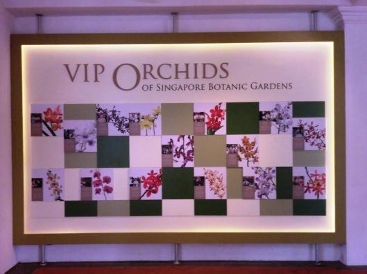 VIP orchird