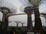pohon garden of the bay