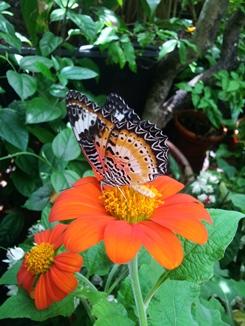 1 taman kupu2