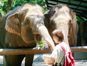 gajah @bali zoo
