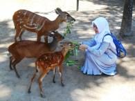 kasih makan rusa @bali zoo