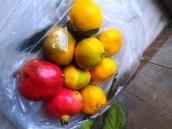 jeruk dan zaitun murah