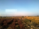 hamparan-ladang