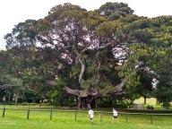 5-botanic-garden4