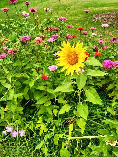 5-botanic-garden8