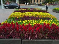 5-cantiknya-bunga-ini