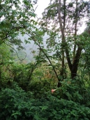 hutan colmar