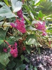 tanaman botanic garden